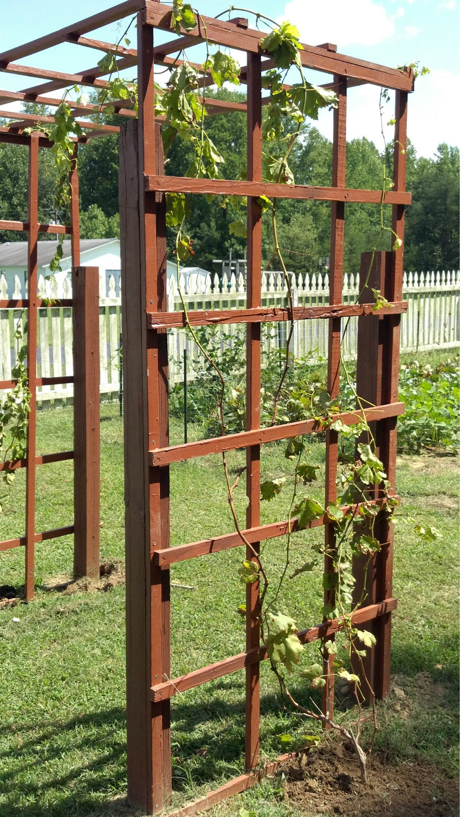 Garden Fence Grapevine Trellis Summers Acres