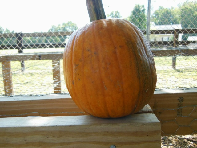The Good Side of Our Gnawed on Pumpkin