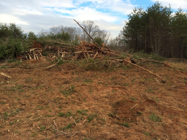 Large Piles of Trees To Clear