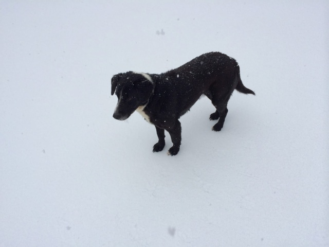 Our Dog, Oreo, Walking Over Snow and Ice