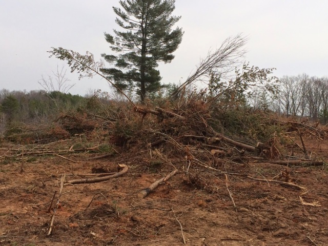 Can You Tell We Accomplished Anything with this Pile of Trees?