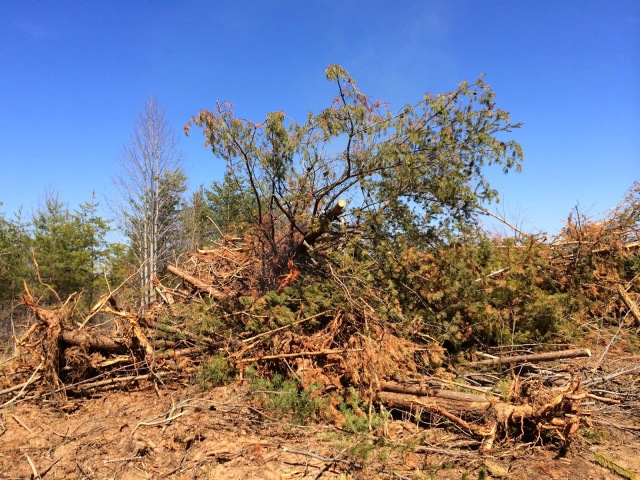 Burning Large Pile of Bulldozed Trees