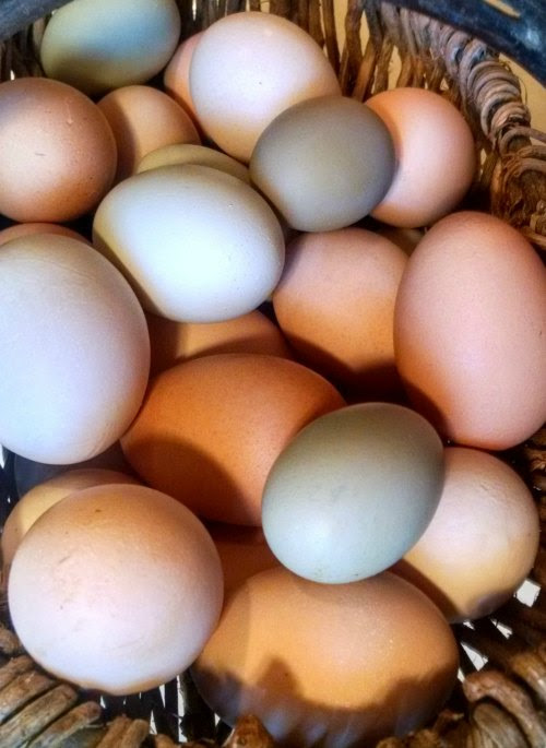 Clarifying Chicken and Egg Labels and Terms