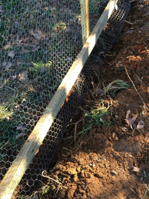 Buried Chicken Wire On Chicken Run