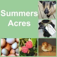 Summers Acres: Fertilized hatching eggs, day old chicks, Nigerian Dwarf goats, jams, jellies, and various seasonal items