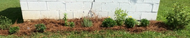 Oregano, Marigold, Sweet Basil, Lavender, Garden Sage, Snowball Bush, Herb Garden